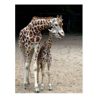 Giraffe with child postcard