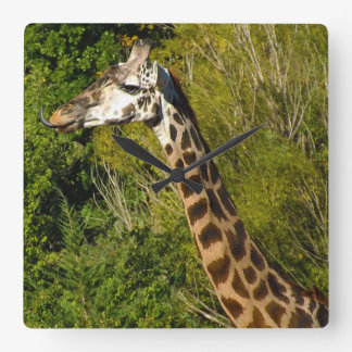 Giraffe with Tongue Sticking Out Curled Up Clocks