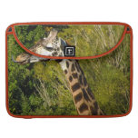 Giraffe with Tongue Sticking Out Curled Up MacBook Pro Sleeve