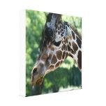 Giraffe Wrapped Canvas Canvas Prints