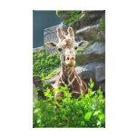 Giraffe Wrapped Canvas Gallery Wrap Canvas