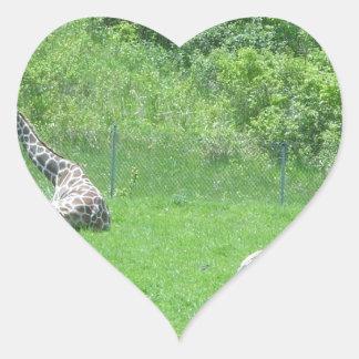 Giraffe & Zebras Grazing During the Summer Heart Sticker