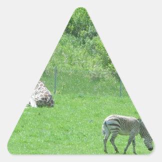 Giraffe & Zebras Grazing During the Summer Triangle Sticker
