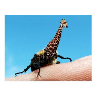 Giraffebeetle postcard
