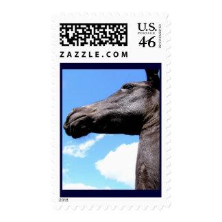 Giraffed Horse Stamps