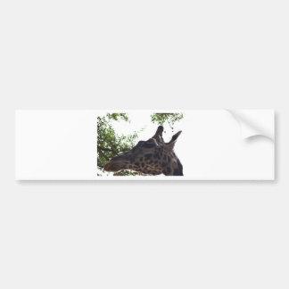 Giraffee Bumper Sticker