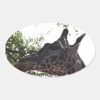 Giraffee Oval Sticker