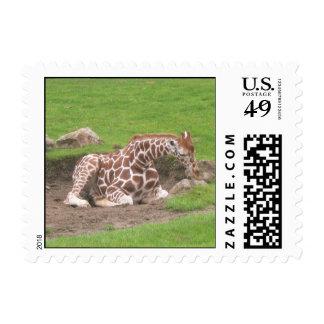 Giraffes 001 Stamp