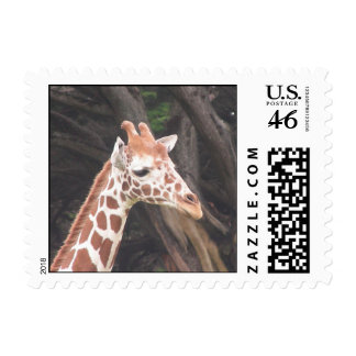 Giraffes 004 Stamp