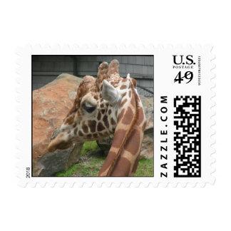 Giraffes 008 Stamp