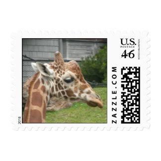 Giraffes 009 Stamp
