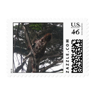 Giraffes 012 Stamp