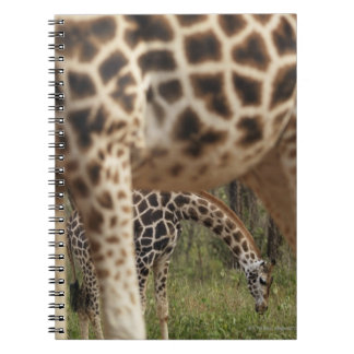 Giraffes 2 spiral notebook