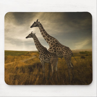 Giraffes and The Landscape Mouse Pad