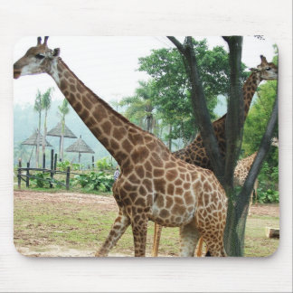 Giraffes and trees,长颈鹿 mouse pad