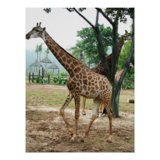giraffes and trees print