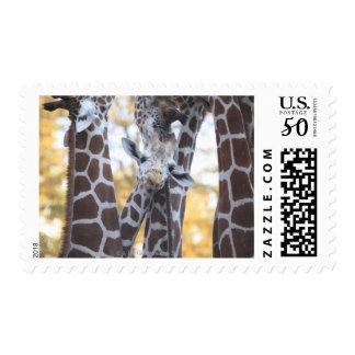 Giraffes at Tama Zoo, Tama Zoo, Tokyo Postage