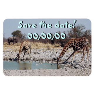 Giraffes at the Watering Hole Magnet