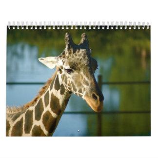 Giraffes Calendars