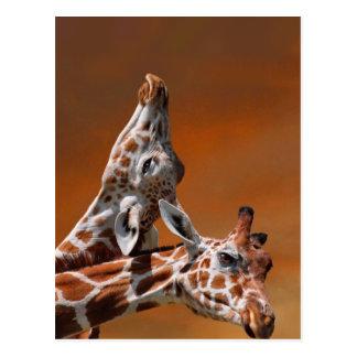 Giraffes couple in love postcard