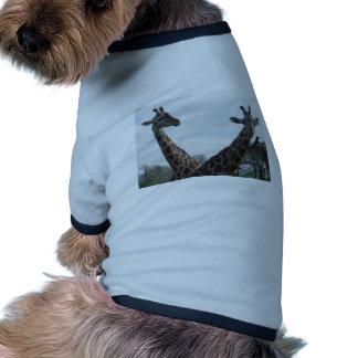 Giraffes Dog Shirt
