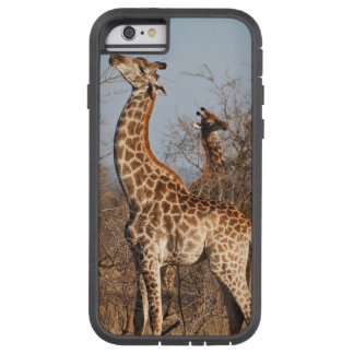 Giraffes eating tough xtreme iPhone 6 case
