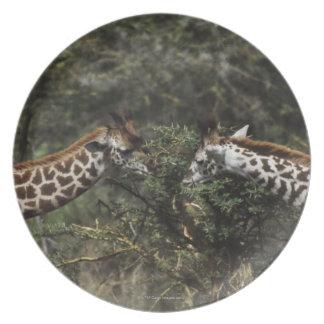 Giraffes Feeding On Acacia Branch, Africa Melamine Plate