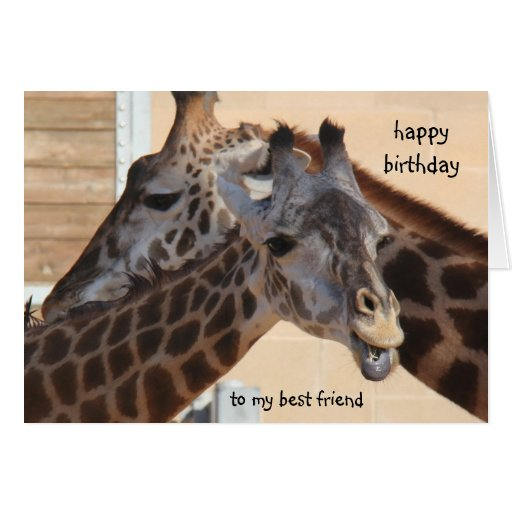 giraffes happy birthday best friend  blank inside card