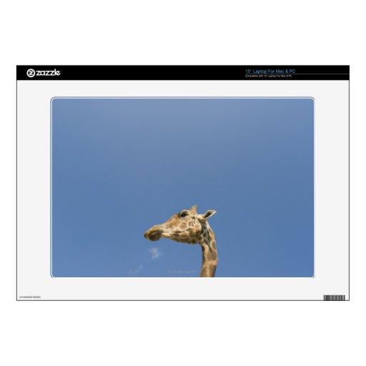 "Giraffe's head 15"" laptop skins"