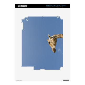 Giraffe's head iPad 3 decal
