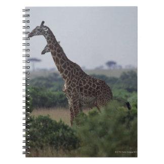 Giraffes in Africa Spiral Note Book