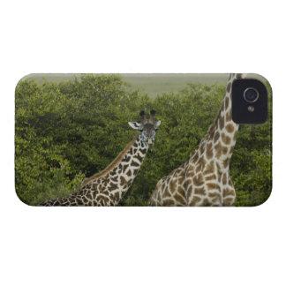 Giraffes in Kenya Africa 2 Case-Mate iPhone 4 Cases