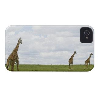 Giraffes in Kenya Africa iPhone 4 Case-Mate Cases