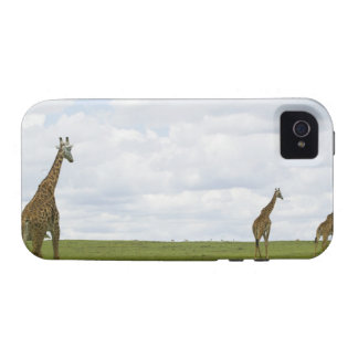 Giraffes in Kenya Africa Vibe iPhone 4 Cases