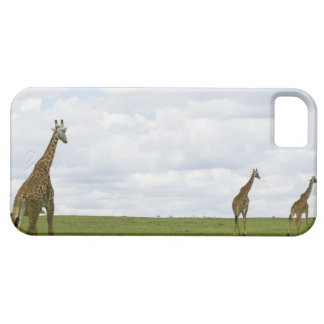 Giraffes in Kenya, Africa iPhone SE/5/5s Case