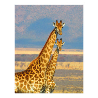 Giraffes in South Africa beautiful nature scenery Letterhead