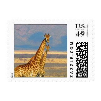 Giraffes in South Africa beautiful nature scenery Stamp
