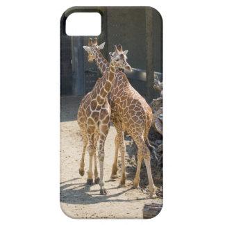 giraffes iPhone SE/5/5s case