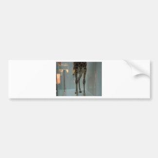 Giraffe's legs (the lions' share?...) bumper sticker