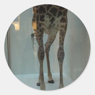 Giraffe's legs (the lions' share?...) classic round sticker