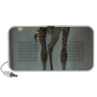 Giraffe's legs (the lions' share?...) travelling speaker