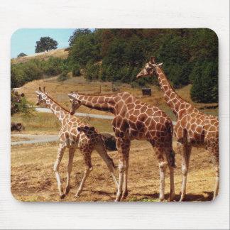 Giraffes Mouse Pads