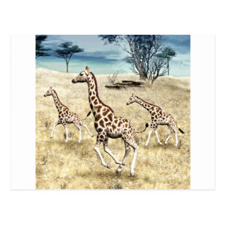 Giraffes on the Savanna Plain Postcard