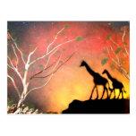 Giraffes Post Cards