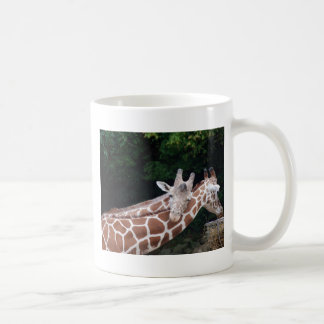 giraffes rubbing necks coffee mug