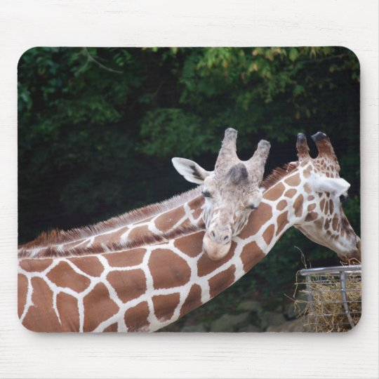 giraffes rubbing necks mouse pad