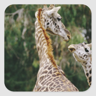 Giraffes Square Sticker