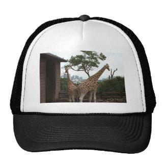 Giraffes Sydney Opera House Taronga Zoo Australia Trucker Hat