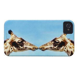 Giraffes touching noses Case-Mate iPhone 4 case