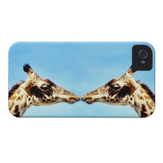 Giraffes touching noses iPhone 4 Case-Mate case